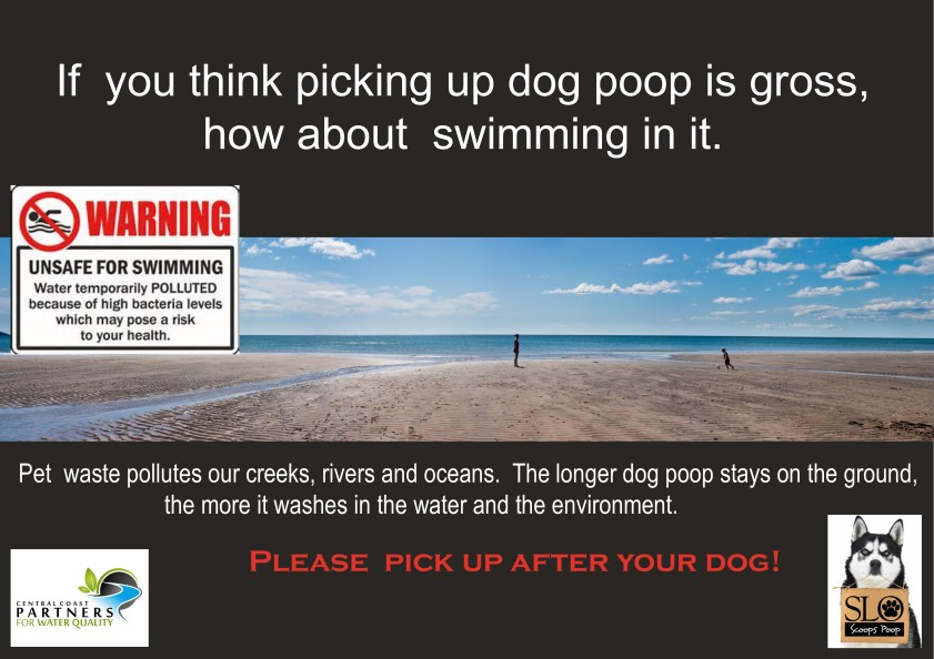 Dog Poop Swimming Poster for website