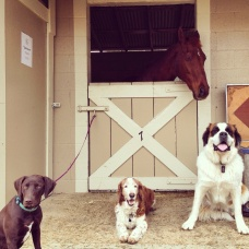 Olive, River, Jake, Lenny the Horse